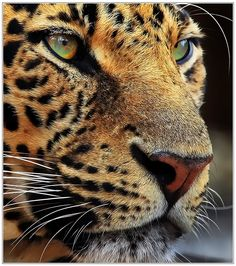 Close up by Klaus Wiese on 500px