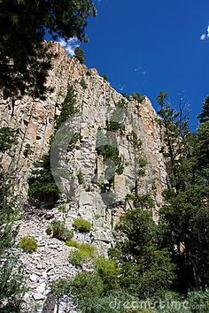 Photo about A shear cliff in a mountain canyon in New Mexico with pines growing from its wall. Image of mountain, cliff, canyon - 78267771 Cliff, New Mexico, Mount Rushmore, Pine, Stock Photos, Mountains, Wall, Nature, Travel
