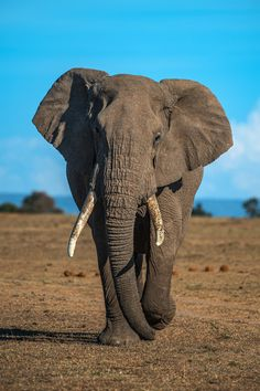The Jolly Elephant story and how we save wildlife World Elephant Day, Elephant Walk, Elephant Love, Elephant Pictures, Elephants Photos, Animal Pictures, Elephant Photography, Wildlife Photography, Animal Photography