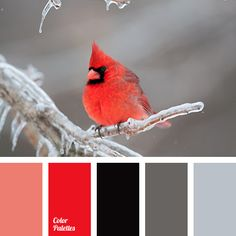almost black color, black and red, bright red, colors of winter, coral, cream, crimson, gray with a hint of brown, gray-brown, scarlet, shades of gray, shades of red, steel, winter palette.