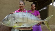 Big Fish Recipe ❤ Creamy Fish Curry prepared by Grandma and Daughter Fish Recipes, Indian Food Recipes, How To Cook Fish, Fish Curry, Big Fish, Daughter, Achilles, Youtube, Life