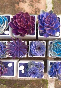 10 DIY Succulent Crafts That Will Look Amazing In Your Dorm & On Instagram | Succulents | Crafts | DIY | College | Dorm