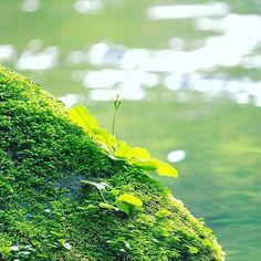 【ha_o_to】さんのInstagramをピンしています。 《days in tokyo『徒然なるままに』 * そんな時間 * * #japan #tokyo #forest #river #spring #flowers #flower #park #pink #color #nature #leaf #green #temple #florist #flowershop #discovertokyo #lotus #日本 #東京 #森 #春 #公園》