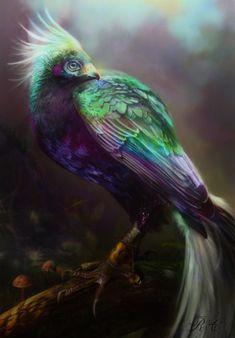 Real Phoenix Bird Sightings Google Search Phoenix