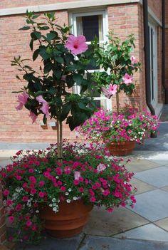 Container Flowers, Container Plants, Container Gardening, Gardening Vegetables, Gardening Tips, Exotic Flowers, Beautiful Flowers, Purple Flowers, Beautiful Front Doors