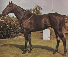 Sexton Blake(1975)Blakeney- Mayo Blues By Abernant. 4x4 To Hyperion, 4x5 To Bahram, 5x5 To Nearco & Blandford. 14 Starts 5 Wins 4 Seconds 2 Thirds. $76,235. Won Champagne S(Eng-2), Seaton Delaval(Eng-3), Gordon S(Eng-3), Westbury S(Eng-3). Died In 2002.: