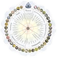 flores de bach y chakras - Pesquisa Google Natural Home Remedies, Herbal Remedies, Chakras, Water Violet, Bach Flowers, Flower Chart, Healthy Lifestyle Tips, Book Of Shadows, Natural Living