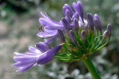Flowers by R-Didier. @go4fotos