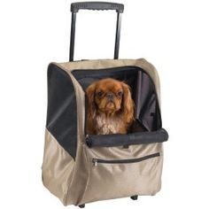 http://www.amazon.com/exec/obidos/ASIN/B000GDZ0VU/pinsite-20 Casual Canine Deluxe Backpack Pet Carrier On Wheels Best Price Free Shipping !!! OnLy 38.99$