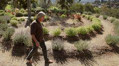 Labyrinth in the Mediterranean Garden - Alta Vista Gardens in Brengle Terrace Park