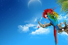 Abstract Wallpaper Background with Parrot