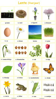 Word Cards: Spring (Spring) rnrnSource by Spring Activities, Sensory Activities, Toddler Activities, Toddler Crafts, Crafts For Kids, Learn Dutch, Dutch Language, Preschool Music, English Vocabulary Words