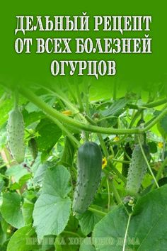Small Farm, Plantar, Growing Plants, Diet And Nutrition, Vegetable Garden, Cucumber, Garden Design, Seeds, Healthy Eating