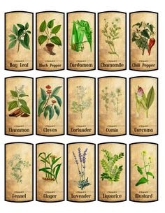 Details about 30 spice labels glossy laminated adhesive : Vintage Labels 15 Spice ? Spice Jar Labels, Spice Jars, Herb Labels, Vintage Labels, Vintage Posters, Vintage Ephemera, Bottle Labels, Book Labels, Vintage Pictures