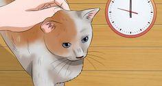 Pet a High Strung Cat