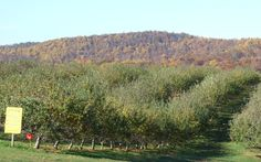 Take a Bite Out of Fall: Top Apple-Picking Spots in America | Sky Top Orchard, Flat Rock, North Carolina