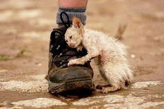 This kitten represents ALL abandoned pets from the Fukushima accident still clinging to life...