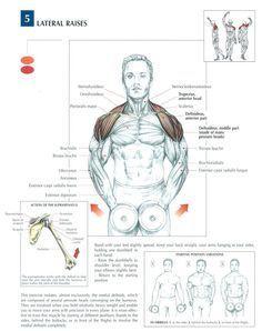 Anatomy of Dumbbell Lateral Raises Sport Fitness, Muscle Fitness, Mens Fitness, Fitness Tips, Health Fitness, Gain Muscle, Build Muscle, Sport Studio, Fitness Motivation