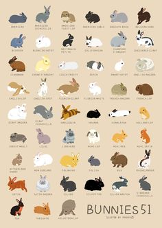 A variety of rabbits The wooden puzzle 1000 pieces ersion paper jigsaw puzzle white card adult children's educational toys Pet Bunny Rabbits, Pet Rabbit, Dwarf Bunnies, House Rabbit, Bunny Drawing, Bunny Art, Animals And Pets, Funny Animals, Rabbit Breeds