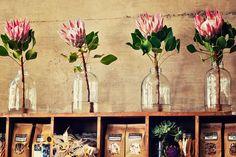 Large glass jar with beautiful protea Protea Flower, Flower Vases, Flower Arrangements, Protea Wedding, Floral Wedding, Wedding Flowers, Flower Decorations, Wedding Decorations, Table Decorations