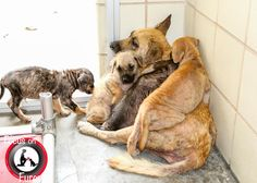 No fb link, hopefully they are safe. Please save my family – street dogs (Darla and her 4 puppies, Donut, Cupcake, Teddy and Cookie) face dismal fate at busy animal control - https://petrescuereport.com/2017/please-save-family-street-dogs-face-dismal-fate-busy-animal-control/ - https://www.facebook.com/1606820082883903/photos/pcb.1982893865276521/1982891981943376/?type=3&theater