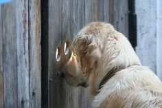 a truly nosy neighbor