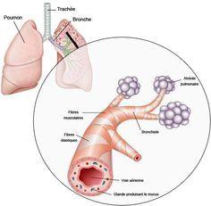 Comment soigner la toux grasse persistante