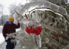 10 Berries encrusted in ice, during an ice storm in Toronto, on December (Reuters/Gary Hershorn) # Winter Wallpaper, Cool Wallpaper, Frozen Photos, Cool Pictures Of Nature, Freezing Rain, Ice Storm, Ice Ice Baby, December 22, Ice Sculptures