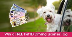 Enter this competition to win one of yourpetid.co amazing Pet ID Tags