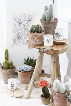 Cactus e suculentas Cacti And Succulents, Planting Succulents, Planting Flowers, Indoor Cactus Plants, Green Plants, Mini Cactus, Cactus Flower, Suculentas Interior, Cactus E Suculentas