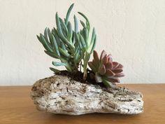 Succulent Driftwood Centerpiece by MakerDyer on Etsy