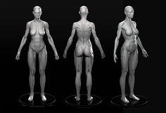 Female Anatomy, Marc Brunet on ArtStation at https://www.artstation.com/artwork/6LPRV