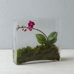 "Tall and slender, this hand-blown terrarium is an unusually shaped showcase for narrow, upright plantings.- Hand-blown glass- Indoor use only- Imported9.25""H, 3""W, 9.25""L"