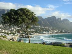 Proud tree Camps Bay pictures Cape Town Cape Spirit Travel.jpg (1152×864)