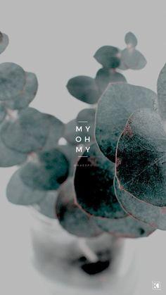 My Oh My Lyrics by The Sweeplings - KAESPO