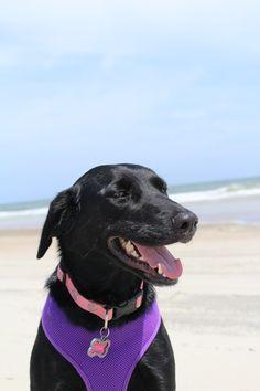 Our rescue dog Ella enjoying life on the beach.  Jennifer O'Neal