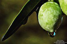 My olive's crying... #food #foodnetwork #foodblogger #foods #foodstyling #foodbeast #foodstagram #fooddiary #foodshare #foodphoto #foodiegram #foodaddict #foodpics #foodies #foodisfuel #foodprep #foodoftheday #foodlovers #health #healthfood #healthyeating #healthyfood #oil #olio #oliva #olive #vegan #veg