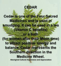 Cedar is One of the Four Sacred Medicines and is Used in Smudging.  It Can be Used in a Tea (Vitamin C benefits) ...or a Bath (for Women at Moon Time) to Attract Positive Energy and Balance.  Cedar Represents the Southern Direction in the Medicine Wheel...