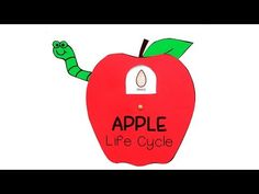 Apple Life Cycle Craft for Kids