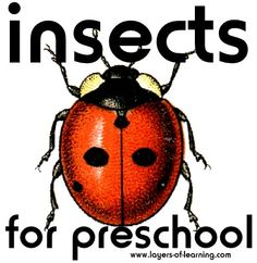 Insects For Preschool.  Books, crafts, activities.