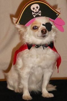 """CAVISYN, my long haired Chihuahua ready to greet the """"trick or treaters"""" that come to our house! Long Haired Chihuahua, Cute Chihuahua, Pet Halloween Costumes, Pet Costumes, Costume Contest, Chihuahuas, Pretty And Cute, Little Dogs, Dog Art"""