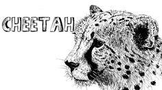 How to draw a Cheetah in Pen and Ink - Online Art Lessons