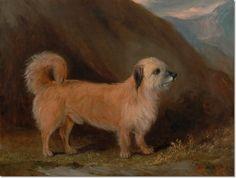 John E Ferneley - John E. Ferneley - Dandie Dinmont Terrier Painting