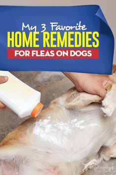 If you're looking for home remedies for fleas on dogs, here are my top 3 favorite that have proven to work well and without harming my pets. Herbal Remedies, Health Remedies, Natural Cures, Natural Health, Home Remedies For Fleas, Flea Remedy For Dogs, Dog Flea Remedies, Diarrhea Remedies, Dogs