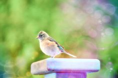 i took this picture of a bird on holiday outside our lodge. I have used befunky for the effect