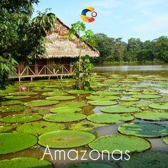 Vive en un plan todo incluido el #amazonas, #viajes #turismo #colombia
