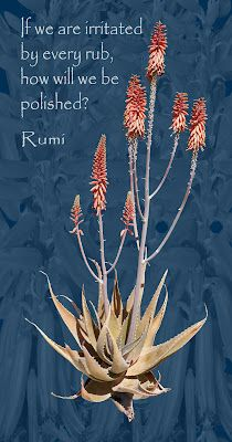 Nightblooming Cards: Aloe Vera with Rumi Quote
