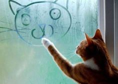 cat, cute, drawing, fogged window, kitten