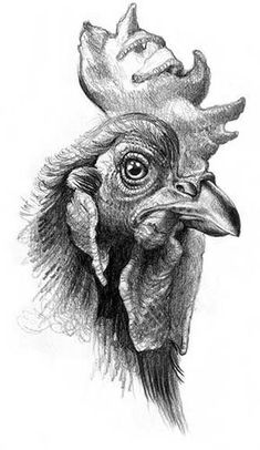 Tips To Stop Chickens From Pecking One Another – Chicken In The Shadows Pencil Drawings Of Animals, Animal Sketches, Bird Drawings, Drawing Sketches, Chicken Drawing, Chicken Painting, Chicken Art, Rooster Painting, Rooster Art