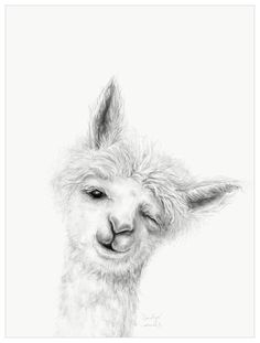 Llama Draw You A Portrait – Carolyn Wall Art - Tiertapete iphone Wallpaper Iphone Cute, Animal Wallpaper, Pencil Art Drawings, Easy Drawings, Llama Arts, Llama Llama, Alpaca Drawing, Pet Portraits, Portrait Wall